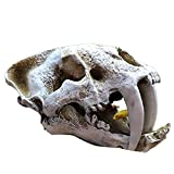 Dreafly Acuario pecera Cabeza de Dinosaurio Adorno de Calavera artesanías de Resina Accesorios de Halloween Herramientas científicas Populares